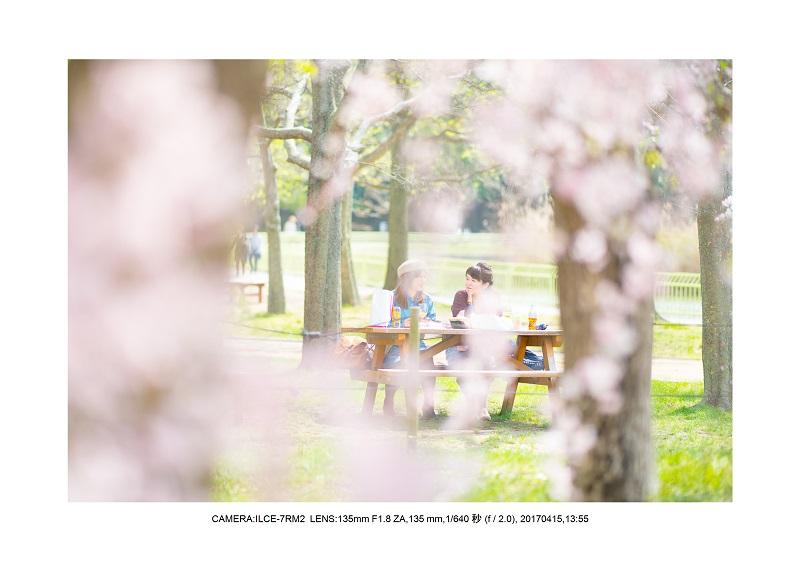 0415長居植物園枝垂桜満開見頃1.jpg