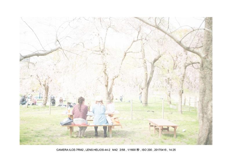 0415長居植物園枝垂桜満開見頃10.jpg
