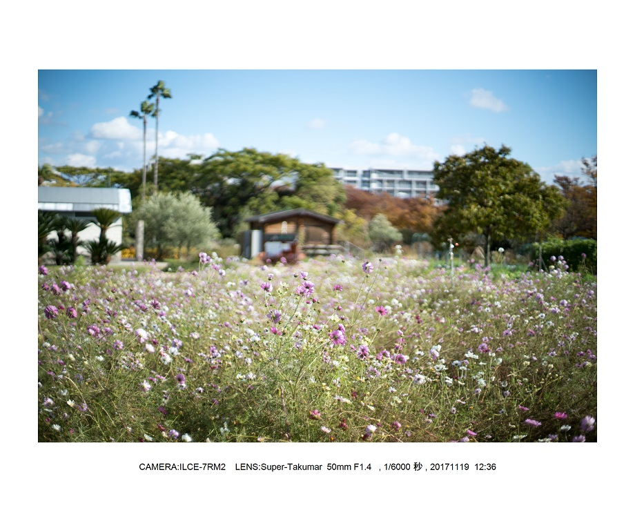 1201711大阪長居植物園オールドレンズスナップ(SuperTakumar50mmF1.4).jpg