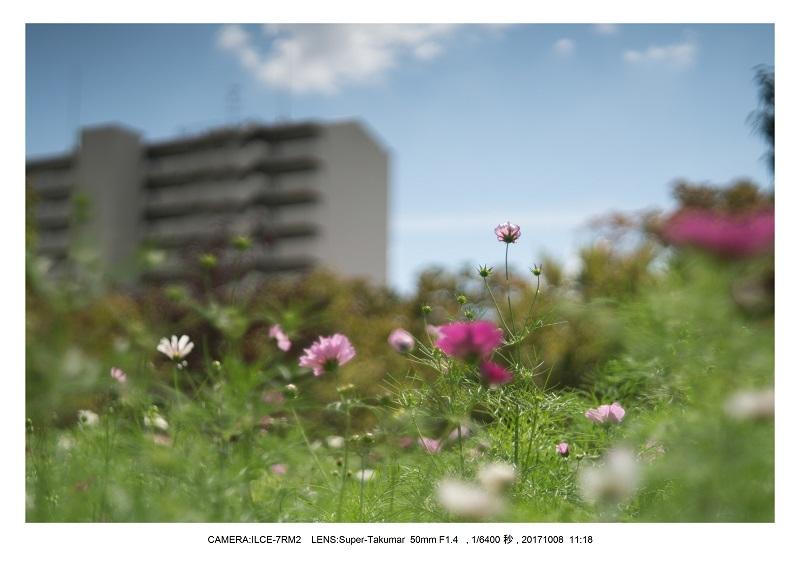 171008大阪オールドレンズ散歩_10.jpg