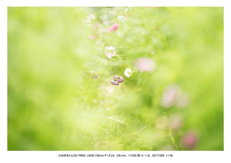 171008大阪オールドレンズ散歩_17.jpg