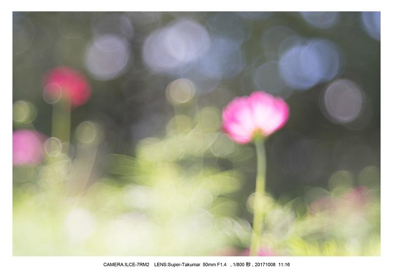 171008大阪オールドレンズ散歩_9.jpg