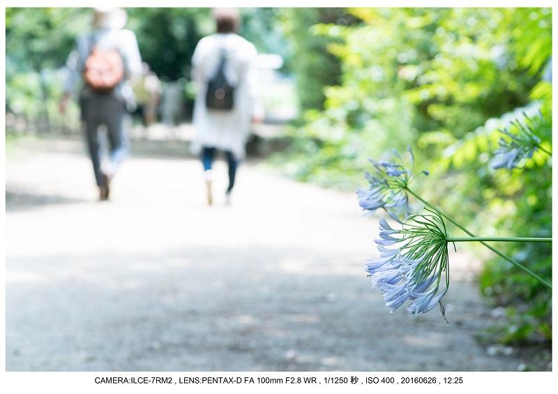 20160626長居植物園_12.jpg