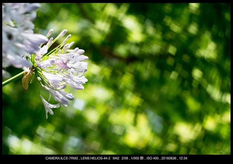 20160626長居植物園_13.jpg