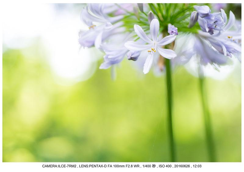 20160626長居植物園_4.jpg