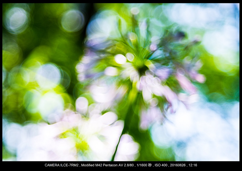20160626長居植物園_バブルボケ_10.jpg