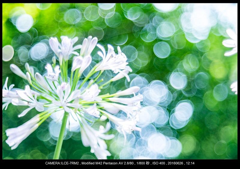 20160626長居植物園_バブルボケ_9.jpg