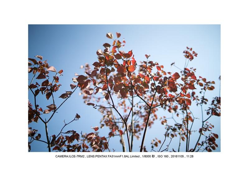 20161105長い植物園コスモス20.jpg