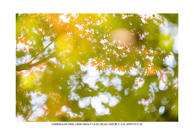 20161113長居植物園の紅葉18.jpg