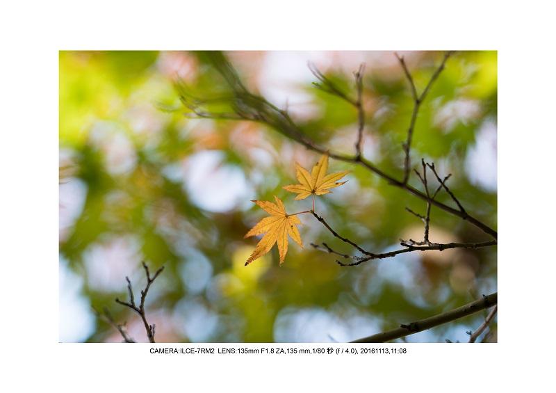 20161113長居植物園の紅葉19.jpg
