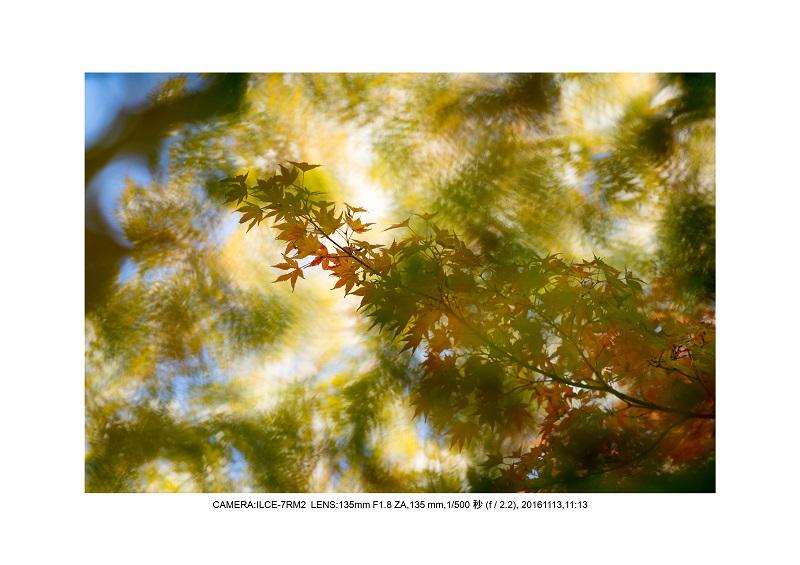 20161113長居植物園の紅葉21.jpg