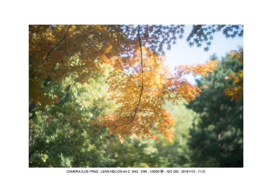 20161113長居植物園の紅葉26.jpg