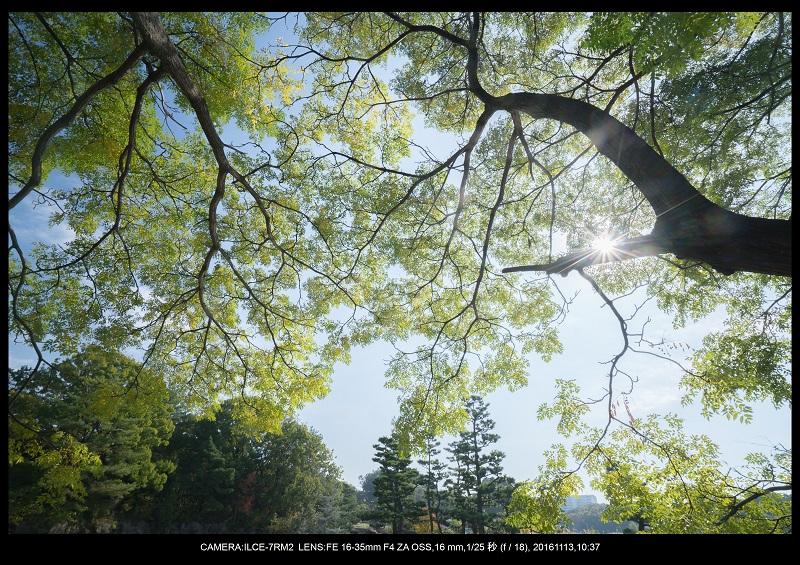 20161113長居植物園の紅葉9.jpg