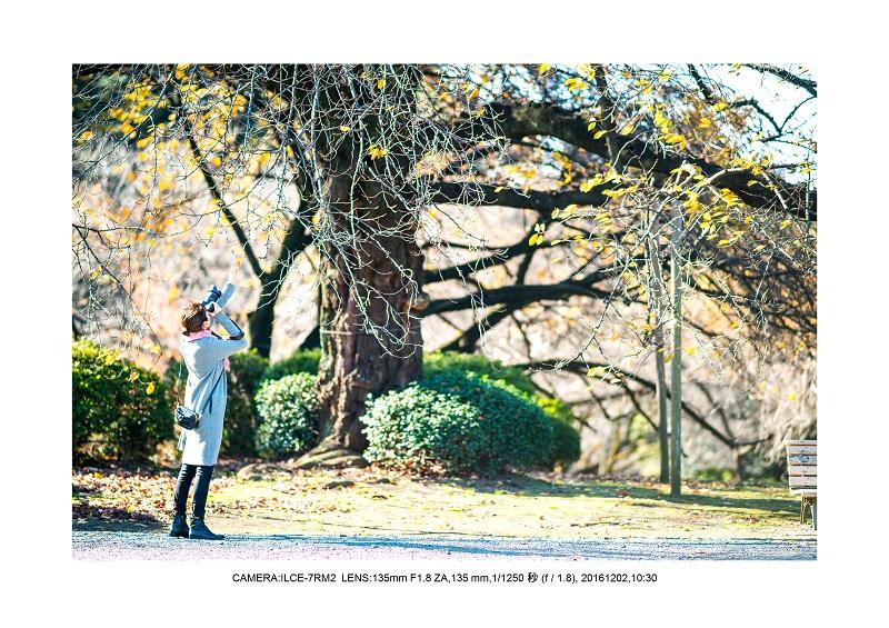 20161202神宮外苑 銀杏並木 絶景 見頃56.jpg