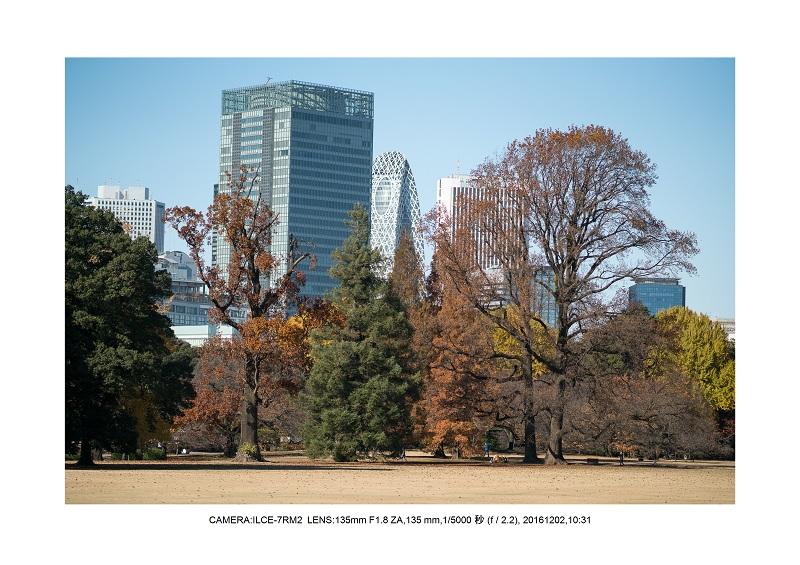 20161202神宮外苑 銀杏並木 絶景 見頃57.jpg
