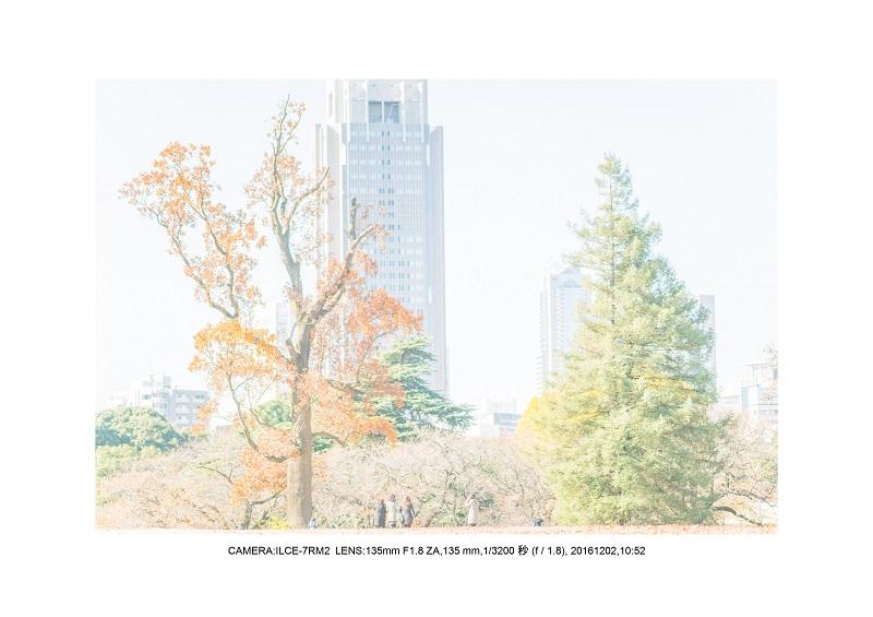 20161202神宮外苑 銀杏並木 絶景 見頃66.jpg