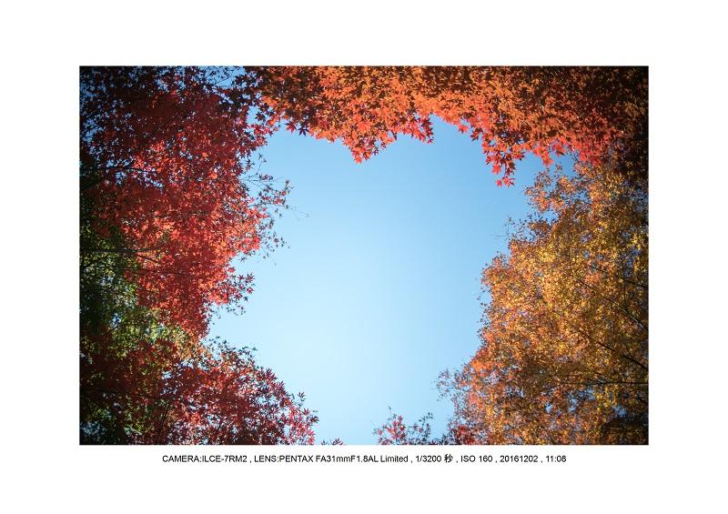 20161202神宮外苑 銀杏並木 絶景 見頃68.jpg