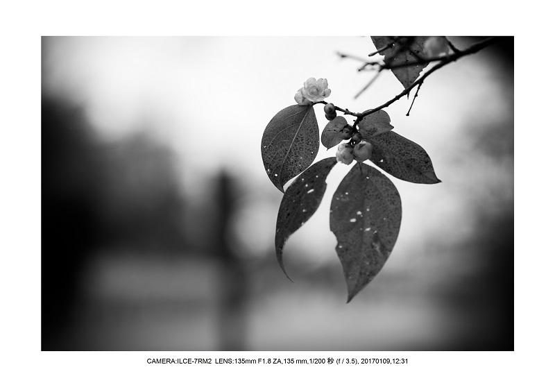 20170110長居植物園15.jpg