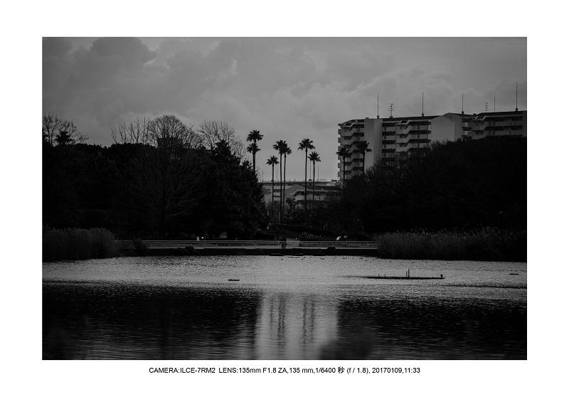 20170110長居植物園6.jpg
