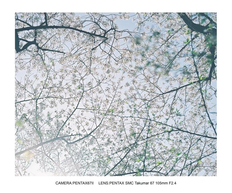 2018桜日和な長居植物園2.jpg