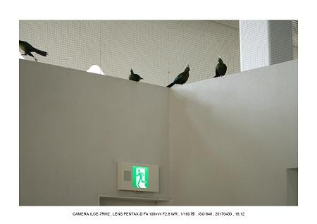 にふれるニフレルNIFREL24.jpg