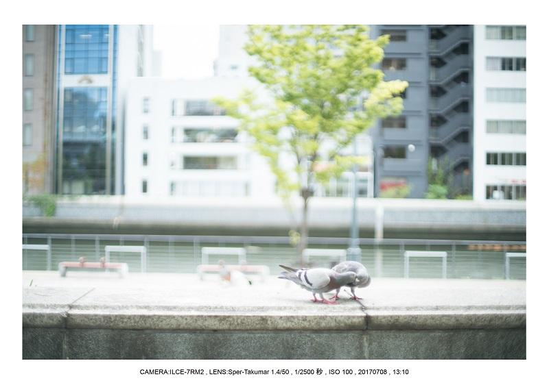オールドレンズで大阪カメラ散歩(Sper-Takumar 50mm F1.4)13.jpg