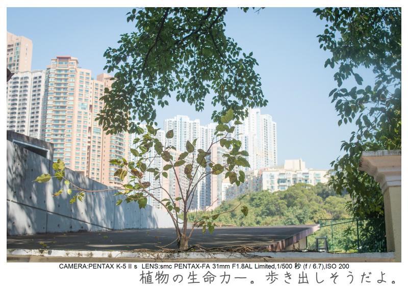 マカオ旅行記145.jpg
