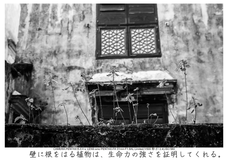 マカオ旅行記171.jpg
