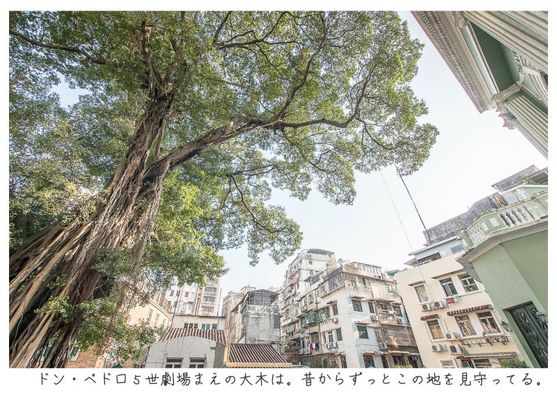 マカオ旅行記186.jpg
