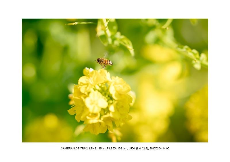 レンズの味を楽しむカメラ散歩長居植物園135mmF1.8ZA-1.jpg