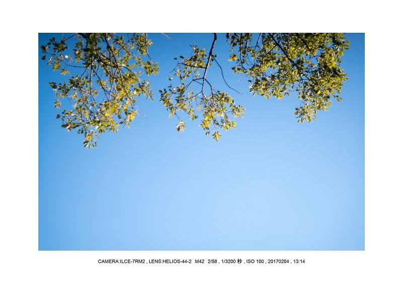 レンズの味を楽しむカメラ散歩長居植物園 Helios-44-2 M42 2 58-1.jpg