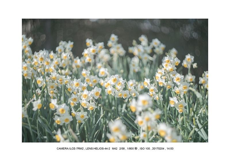レンズの味を楽しむカメラ散歩長居植物園 Helios-44-2 M42 2 58-12.jpg