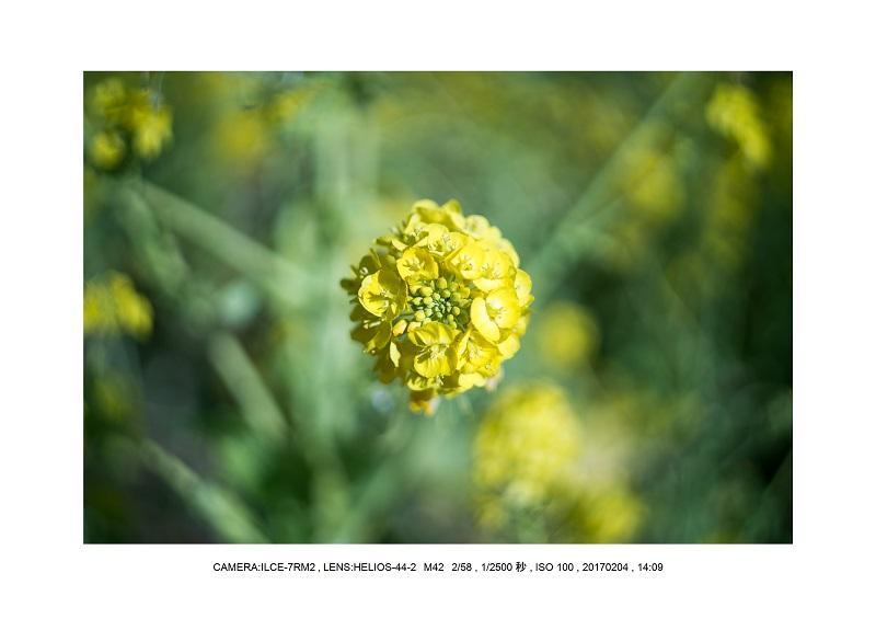 レンズの味を楽しむカメラ散歩長居植物園 Helios-44-2 M42 2 58-8.jpg