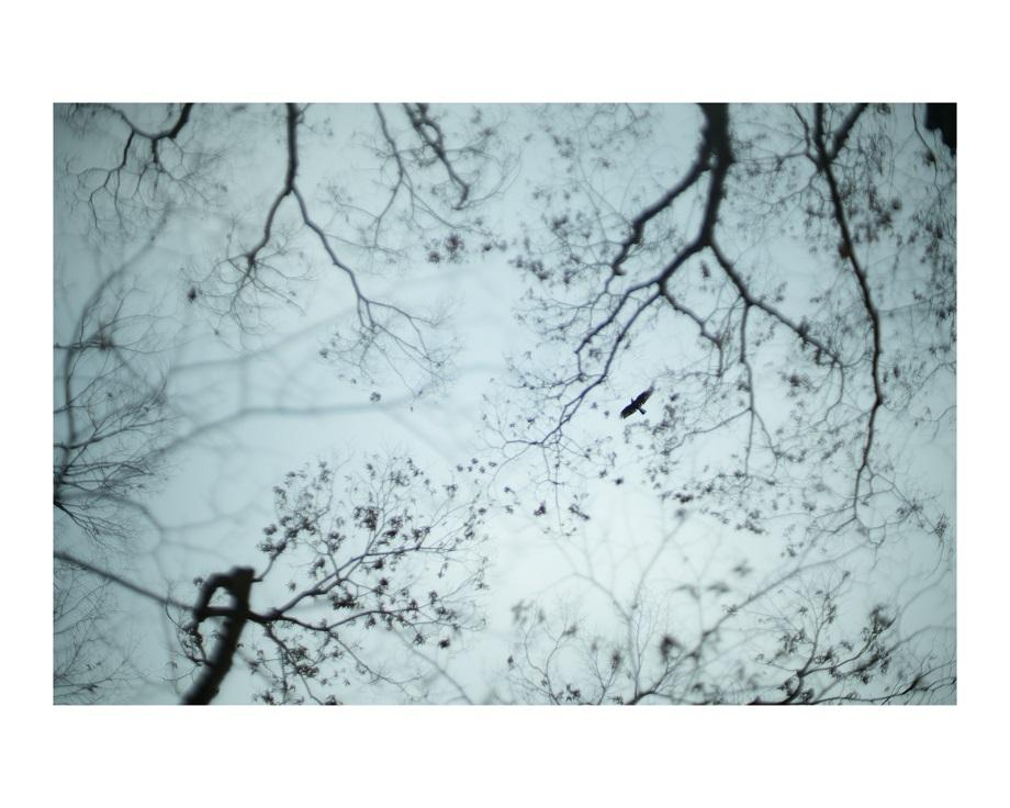 冬の大阪長居植物園植物0.jpg