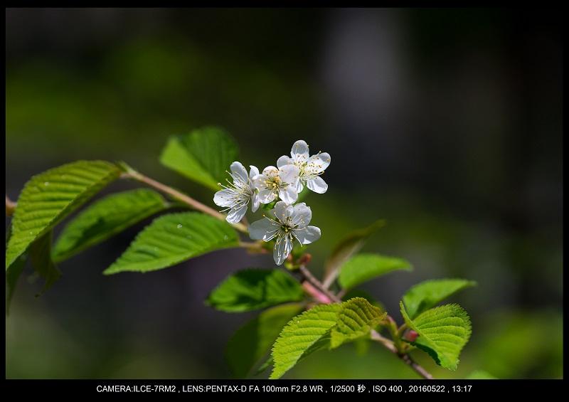 初夏の上高地の星景・夜景_107.jpg