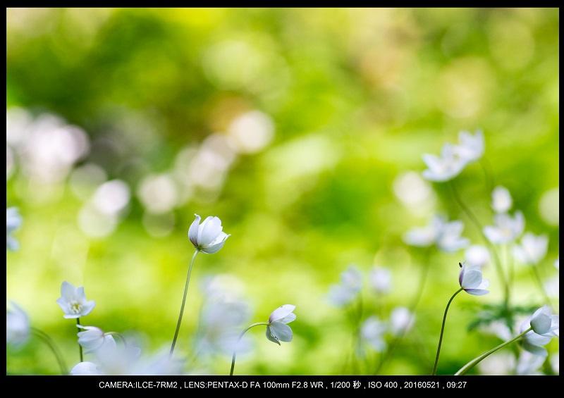 初夏の上高地_26.jpg
