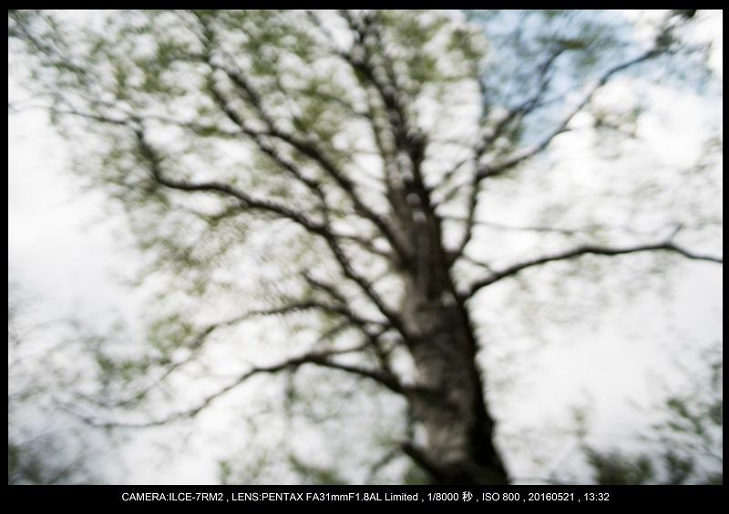 初夏の上高地_48.jpg