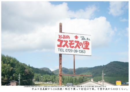 大阪・とよのコスモスの里2.jpg