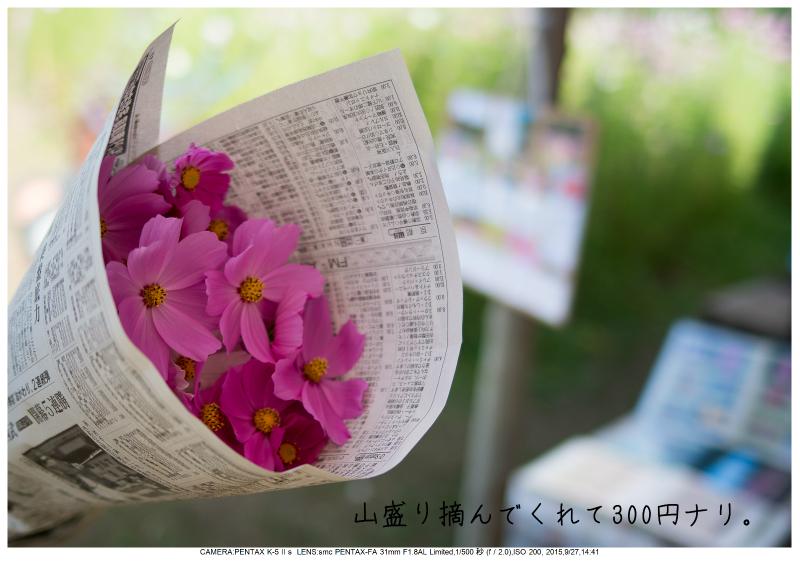 大阪・とよのコスモスの里31.jpg