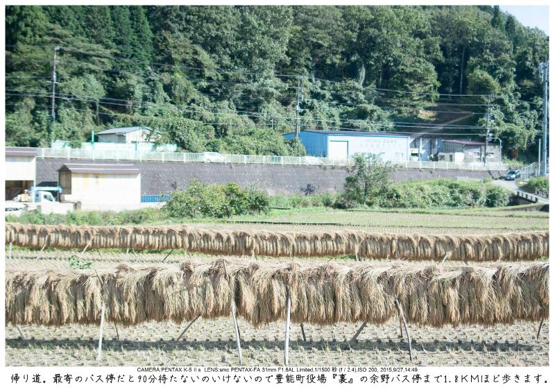 大阪・とよのコスモスの里34.jpg