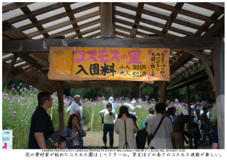 大阪・とよのコスモスの里4.jpg