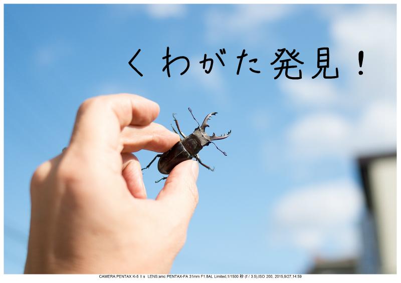 大阪・とよのコスモスの里40.jpg