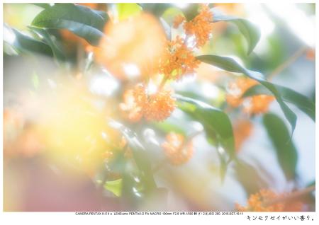 大阪・とよのコスモスの里41.jpg