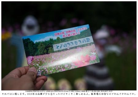大阪・とよのコスモスの里5.jpg