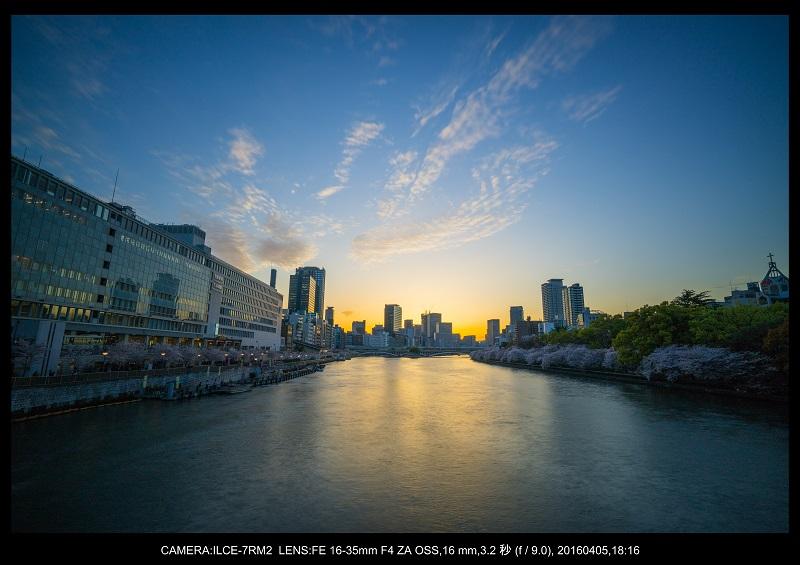 大阪・天満橋の桜夜景_1.jpg
