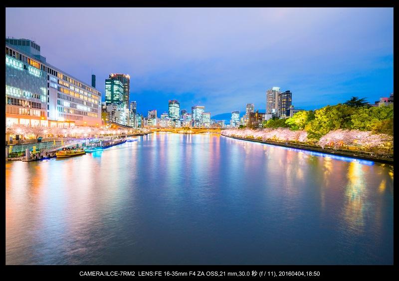 大阪・天満橋の桜夜景_17.jpg