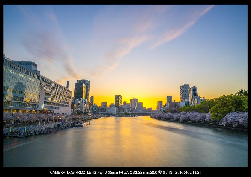 大阪・天満橋の桜夜景_3.jpg
