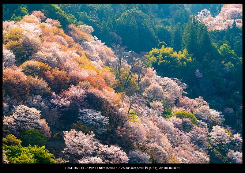 奈良の絶景風景・吉野山の桜見頃満開(下千本・中千本・上千本)旅行記画像0000.jpg