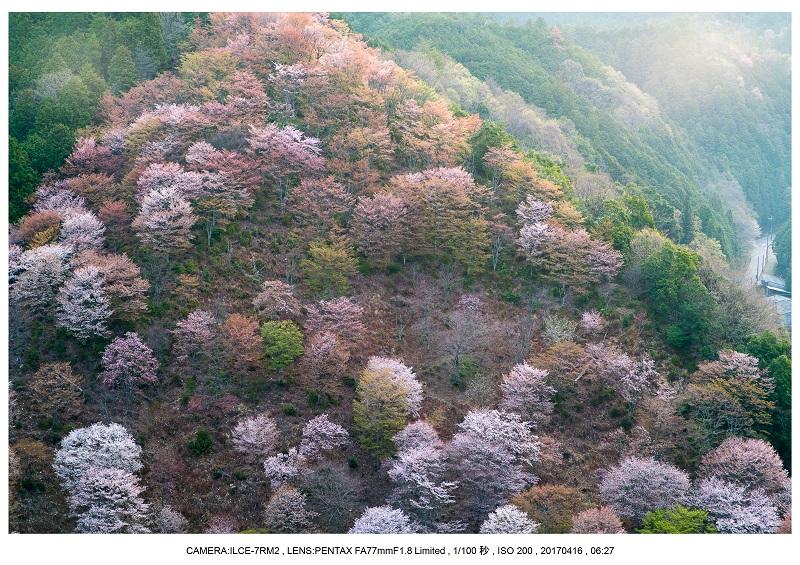 奈良の絶景風景・吉野山の桜見頃満開(下千本・中千本・上千本)旅行記画像12.jpg