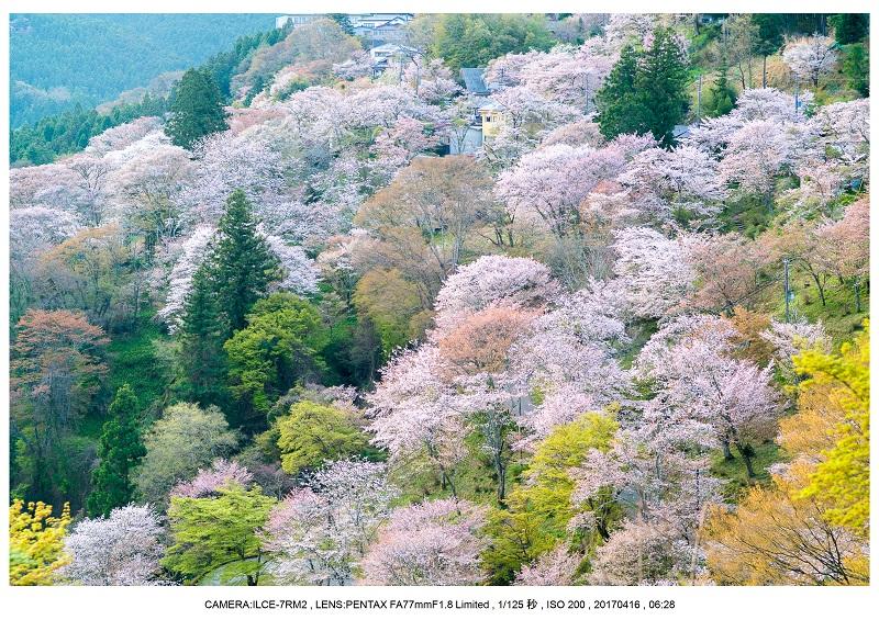 奈良の絶景風景・吉野山の桜見頃満開(下千本・中千本・上千本)旅行記画像13.jpg